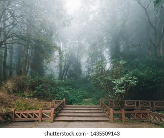 Wooden platform with Cedar trees and fog in the background in the forest in Alishan National Forest Recreation Area in winter in Chiayi County, Alishan Township, Taiwan.