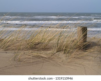 wooden pole with barbed wire and beach gras in front of the sea