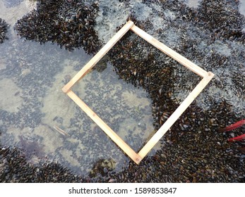 A wooden quadrat square frame for marine ecology flora and fauna sampling, on a beach in the North of France