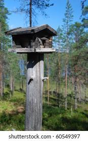 Wooden rack for wild birds in Finnish forest