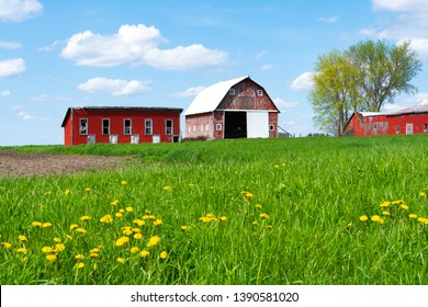 Wooden red farm buildings in open grass field on a Spring afternoon.  Bureau County, Illinois, USA