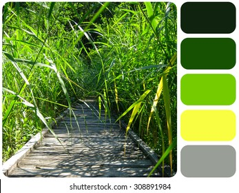 wooden road in the sunny summer forest grass, background colour palette with color swatch