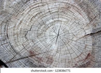Wooden Rough Cut Log Texture