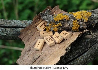 Wooden runic alphabet, which lie on a dry bark from a tree. Near yellow moss. Runic circle, Futhark in natural elements