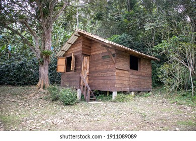 wooden shack in the forest