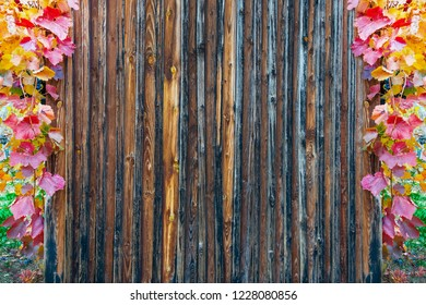 wooden slats texture framed with autumnal colored vine leaves used for advertising