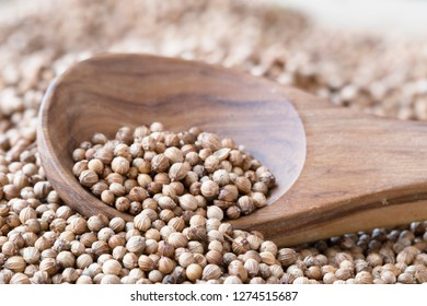 Wooden spoon full of whole coriander seeds