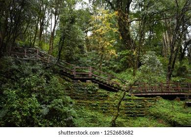 A wooden stair at Alishan international park, Taiwan.