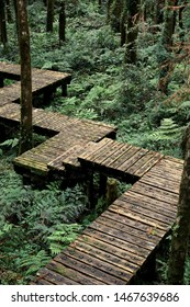 The wooden stair in the deep forest with a kind of mysterious atmosphere.