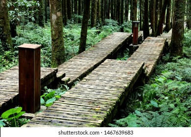 The wooden stair in the deep moist forest with lush lichen.