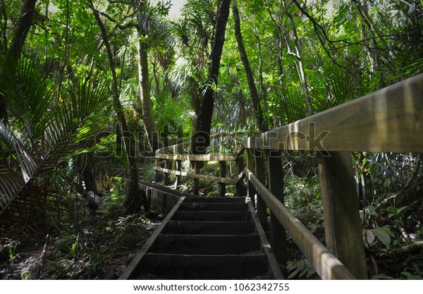 wooden staircase through jungle