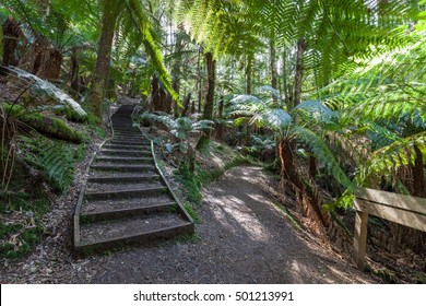 Wooden stairs and signpost in jungle Australian Rainforest
