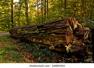 wooden stem in forest