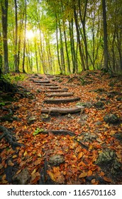 Wooden steps in autumn forest. Stairway to jungle