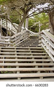Wooden steps in the park
