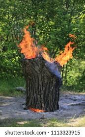 wooden stump burn on meadow in forest