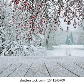 Wooden surface from planks strewn with snow in city park at foreground and branches of wild apple tree with red fruits, snowy fir-trees, footpath leading off  in the winter park at background