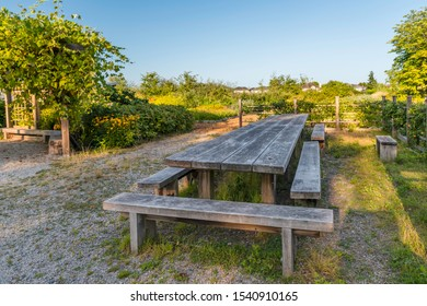 A wooden table and benches dug in the ground, a porch covered with grape plants, a flower bed, fruits of apples hanging from the trees along the wooden fence, private houses and a blue sky
