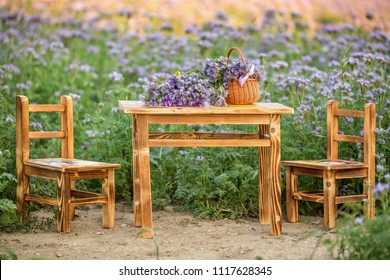 Wooden table and chairs in the Phacelia flowers field . Violet blooming nature agriculture fields. ( Phacelia tanacetifolia )