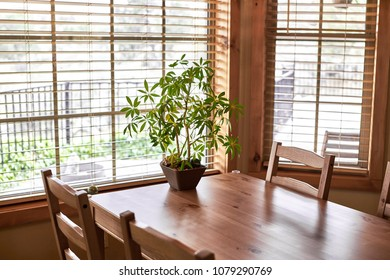 A wooden table and chairs with windows around it and a potted plant on the table
