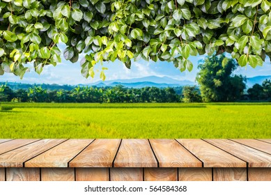 Wooden table and ivy plant isolated on a rice field.
