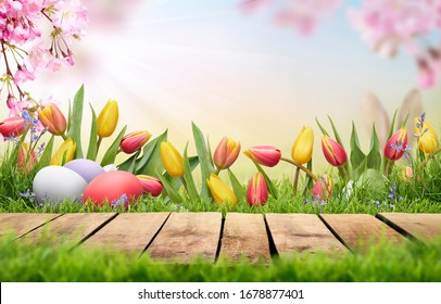 A wooden table top product display with Easter Eggs, pink cherry blossom flowers and tulips blooming in spring Easter background.