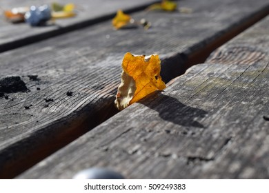 Wooden tables in autumn.