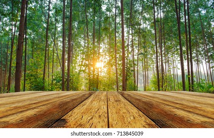 wooden terraced floor beside green natural forest in the morning sunrise