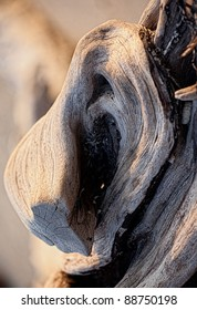 Wooden texture damaged by sea and worm