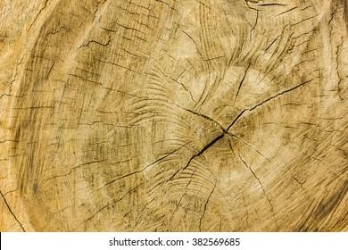wooden texture , heartwood