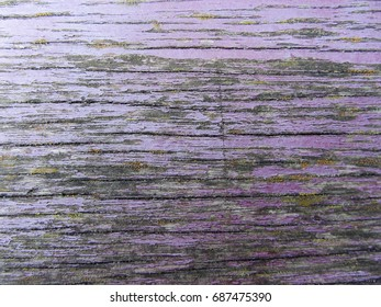 Wooden texture of purple color