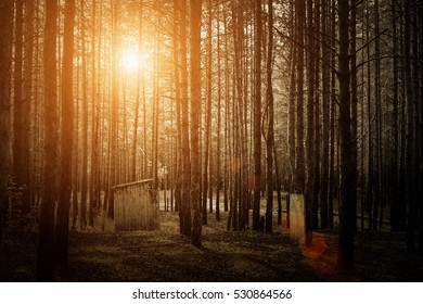 Wooden toilet  in a pine forest at sunset or sunrise