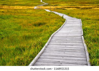 Wooden tourist path over the peatlands/swamp/marsh with beautiful sky. Endemic flora and forest. Natural bacground. Boží Dar peatlands, Czech republic.