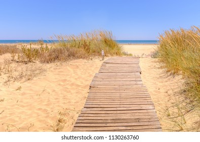 wooden track path leading through sof golden sand and beach grass toward the blue sky and ocean on Isla Canela beach, Ayamonte, Andalucia, Spain