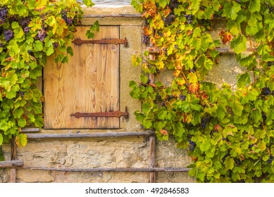 Wooden trapdoor and grape vines - Rustic image in autumnal settings with the wooden trapdoor and  the hanging grape vines, on the wall of an old german house