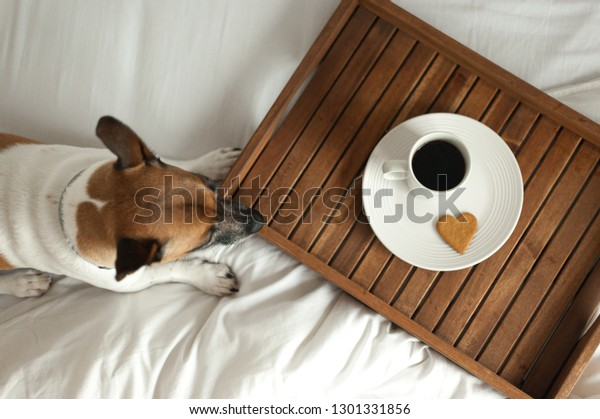Wooden tray with breakfast and dog on white bed
