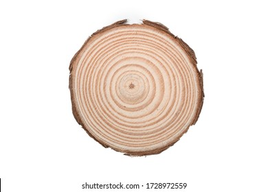 Wooden tree cut surface isolated on white background