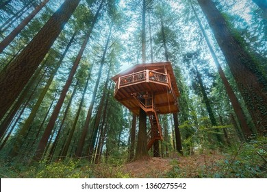 wooden tree house in the forest