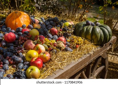 Wooden trolley with autumn fruits. The autumn harvest festival is an old cart with pumpkins, apples, grapes and plums. Landscape design in country style for the autumn season.