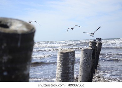 Wooden trunks on the beach and seagulls flying