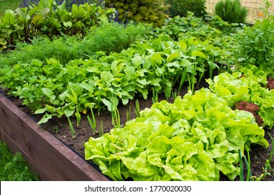 Wooden vegetable bed box with soil in the home garden. Ecology and homegrowing concept.