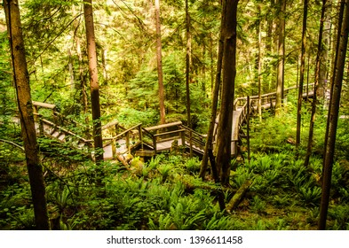 Wooden walk path through beautiful green forest, Capilano Vancouver