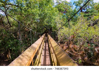 Wooden walk way cross over tree tops surrounded by rainforest. Myakka state park, Florida.