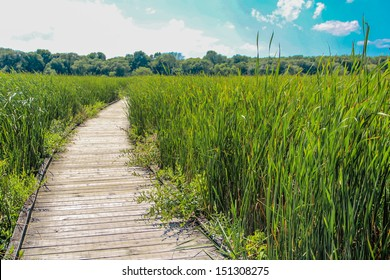 Wooden walk way in middle of a grass field during a sunny summer day
