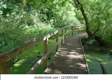 Wooden walkway above a wetland forest, Riverside Nature Reserve, Guildford, Surrey, UK