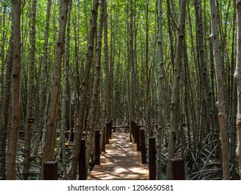 A wooden walkway built into the mangrove forest