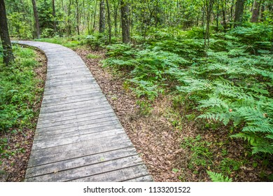 Wooden walkway in a forest