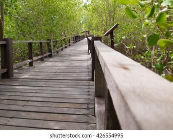 wooden walkway to green nature