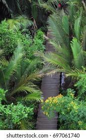 Wooden walkway inside a lush green