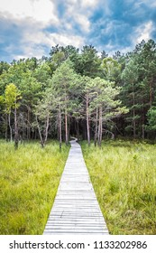 Wooden walkway leading to a forest